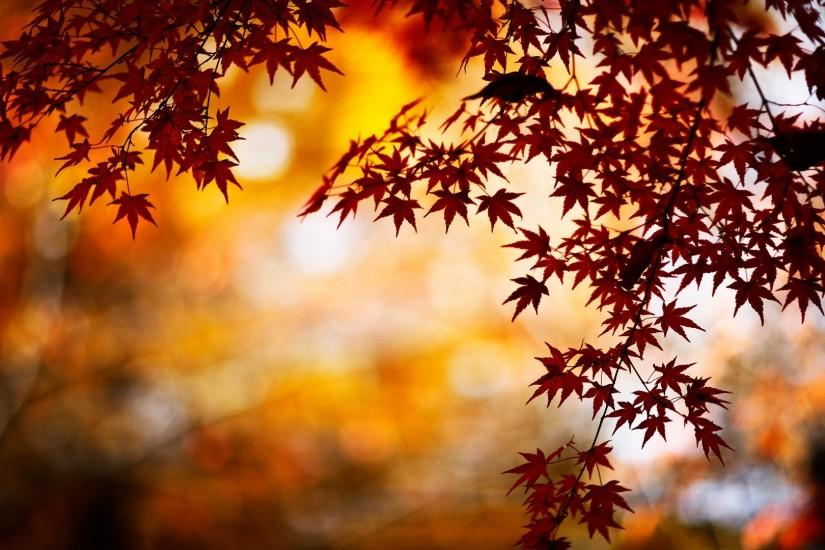 cool fall backgrounds 1920x1080 full hd