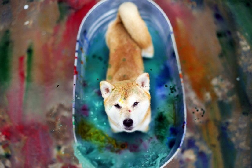 Painted Shiba Inu Desktop Background. Download 1920x1200 ...