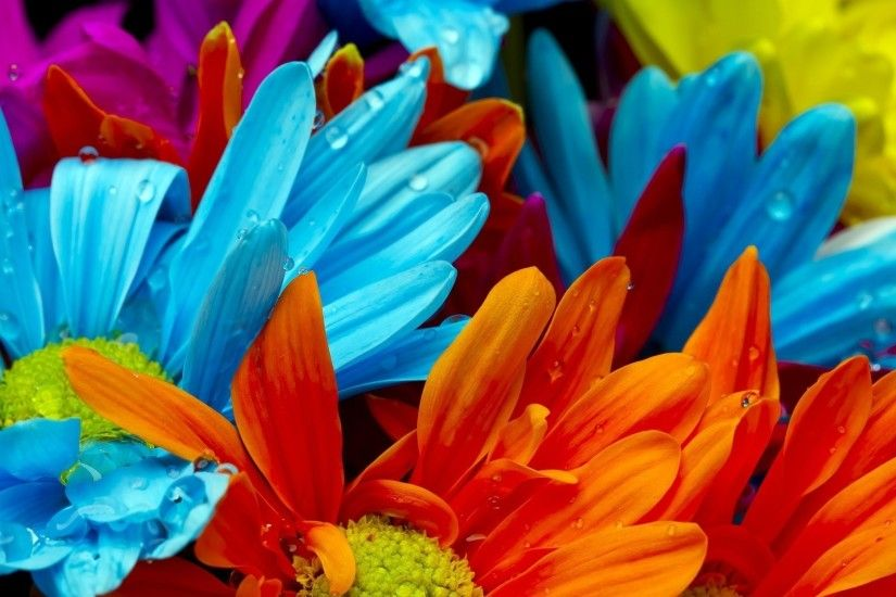 Bright Colored Flowers