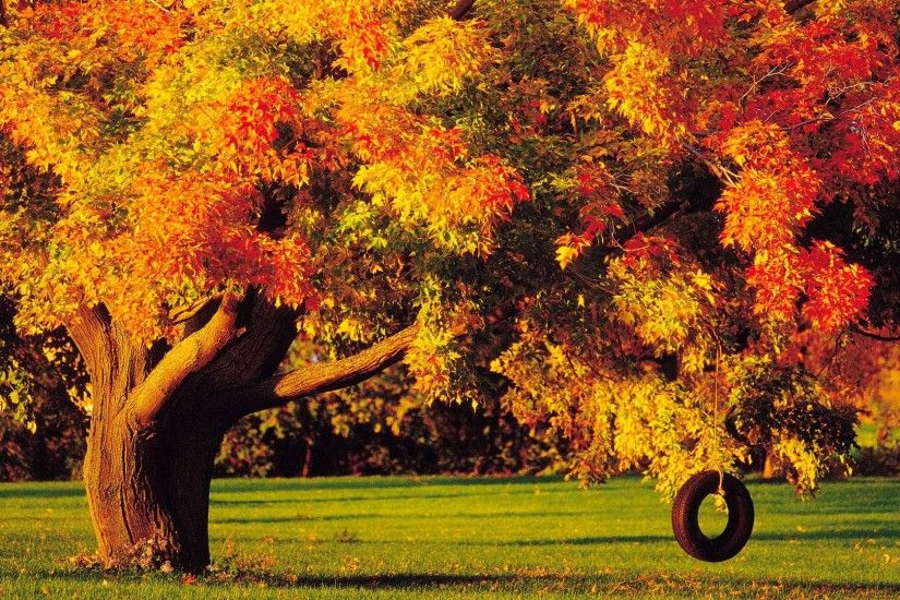 Earth - Tree Earth Fall Foliage Swing Tire Rope Wallpaper