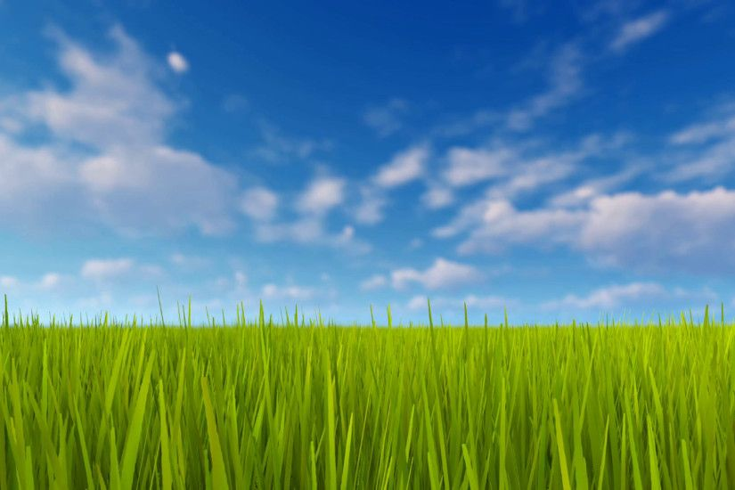 Simple natural background with closeup of fresh green grass field and blue  sky with blurred clouds at spring day 4K Motion Background - VideoBlocks