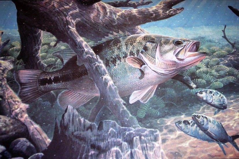 fish sport water fishes underwater lake river artwork bass wallpaper .