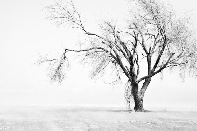 Black And White Tree Background HD Wallpaper.