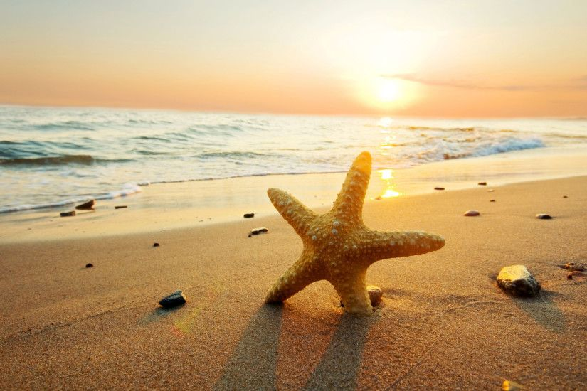 ... starfish background wallpapersafari ...