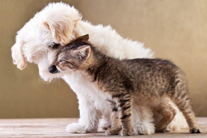 Cats And Dogs Wallpapers Group (82 ) ...