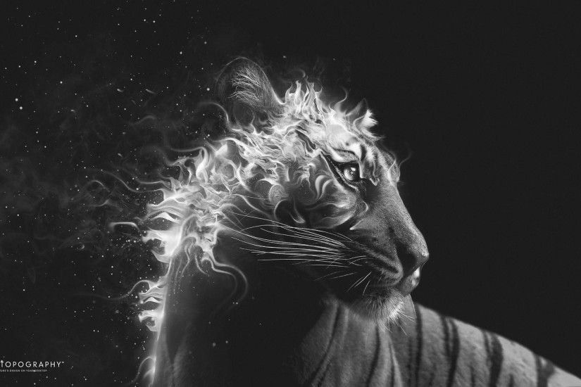 Creative & Graphics Black And White Tiger Fire Wallpaper. Black .