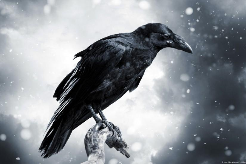 Raven with Stormy Sky [1920x1200] ...