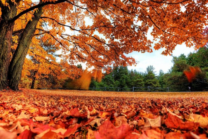 2560x1440 Wallpaper autumn, leaves, nature