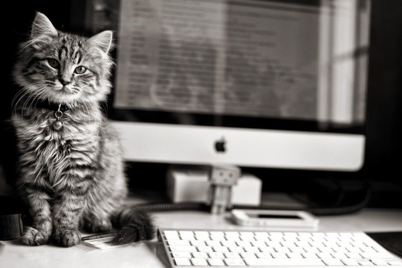 hd cat wallpapers, eyes computer, reflection, black, kitten, background  images, white, keyboard, fur, apple, cats, stare, danbo,animals,amazing,  felines, ...