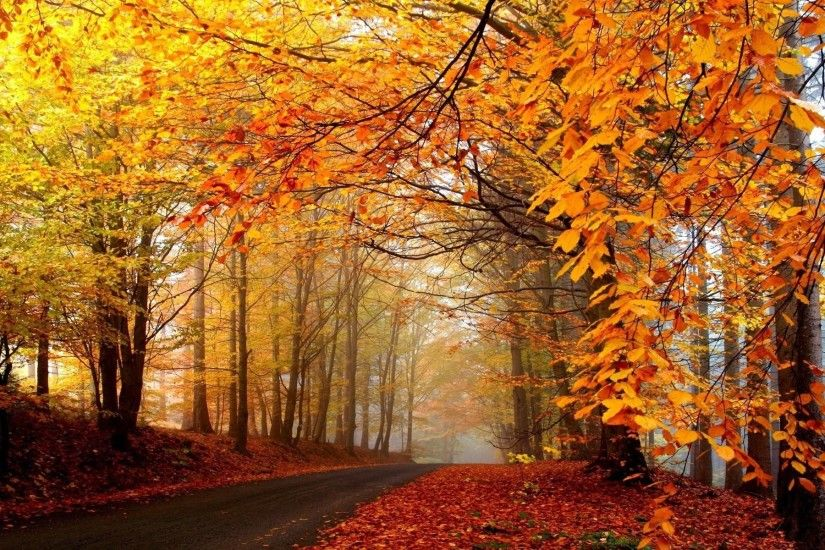 Wallpapers For > Fall Trees Background · New England ...