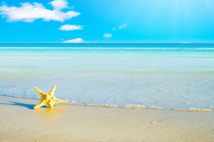 Download Starfish Background 14572 2560x1600 px High Resolution .