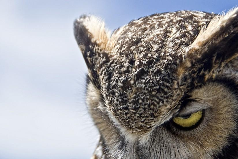 Owl For Android Wallpapers Phone