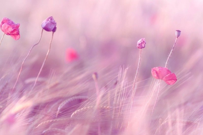 Light Pink Flower, Green Blurry Background HD Wide Wallpaper for Widescreen  (55 Wallpapers)