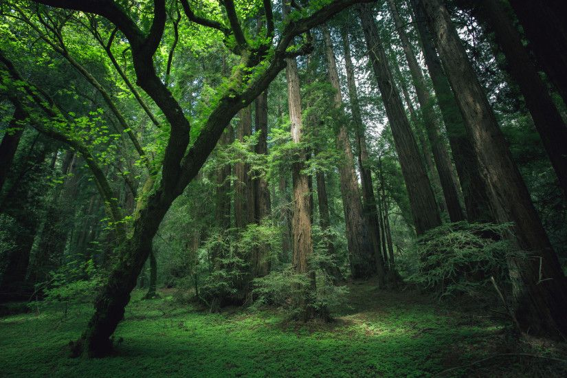 california redwood forest wallpaper - photo #44. 13 reasons why the  Northeast is the best region (yard .