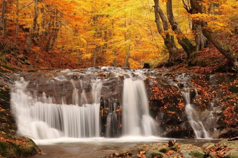 Leaves Tag - Colors Trees Seasons Leaves Autumn Fall Landscapes Forest  Nature Waterfall Rivers Hd Wallpapers