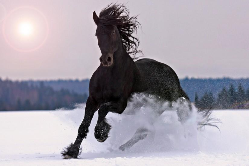 vertical horse wallpaper 2760x1758 for full hd