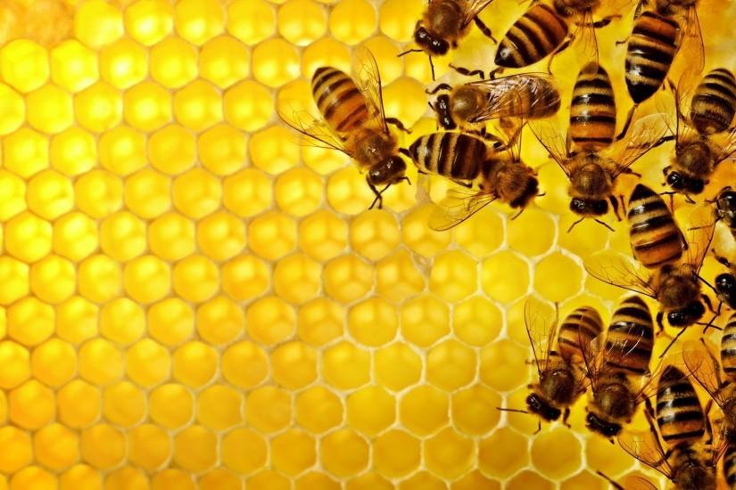 amazing honeycomb background 1920x1080 desktop
