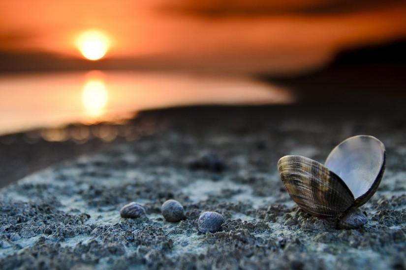 Landscape 4K Ultra HD Wallpaper | ... Landscape, Beach, Seashells, Sunset