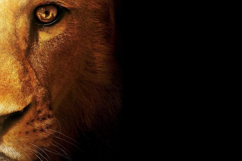 amazing lion background 1920x1080 free download