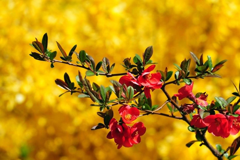 Beautiful Flowers Nature Wallpaper Hd 16 Free Download Beautiful Maroon Flower  Wallpaper PageResource.com ...