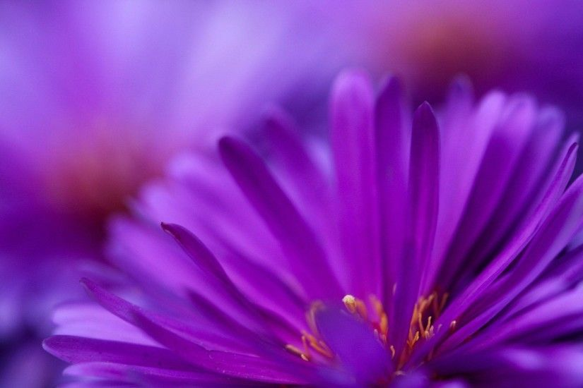 Wallpapers For > Pretty Purple Flower Backgrounds
