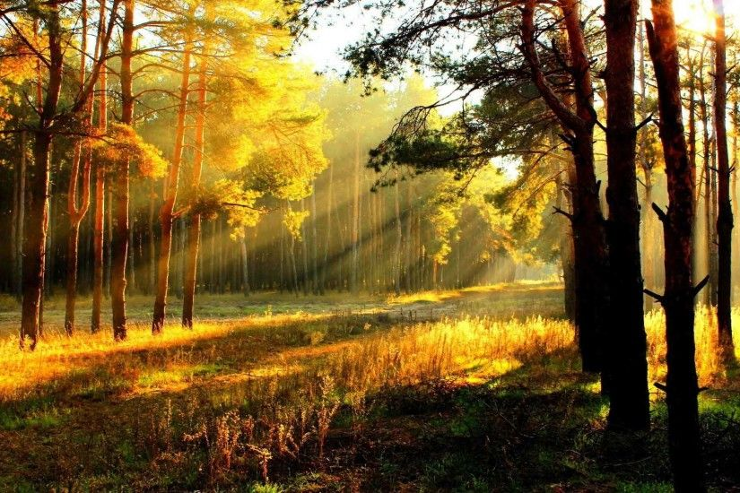 Trees Fall Forest Autumn Tree Landscape Nature Wallpaper Desktop Latest