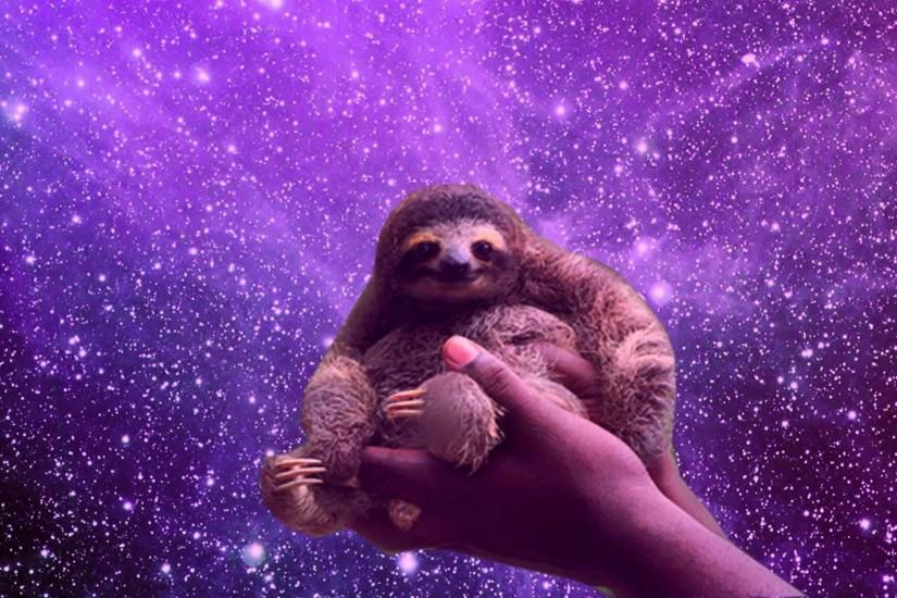 Free Download Sloth Wallpapers - Sloth Photo