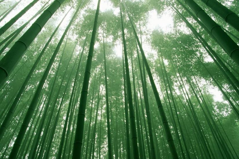 new bamboo wallpaper 3840x2160