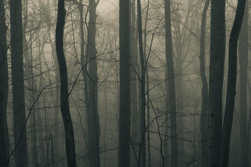 large dark forest wallpaper 1920x1080 download