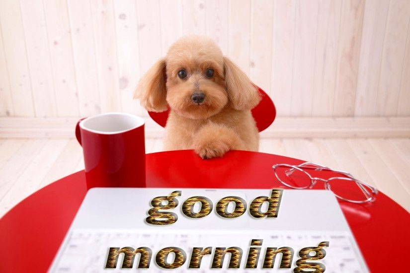 Good Morning Tea cup dog Wallpapers