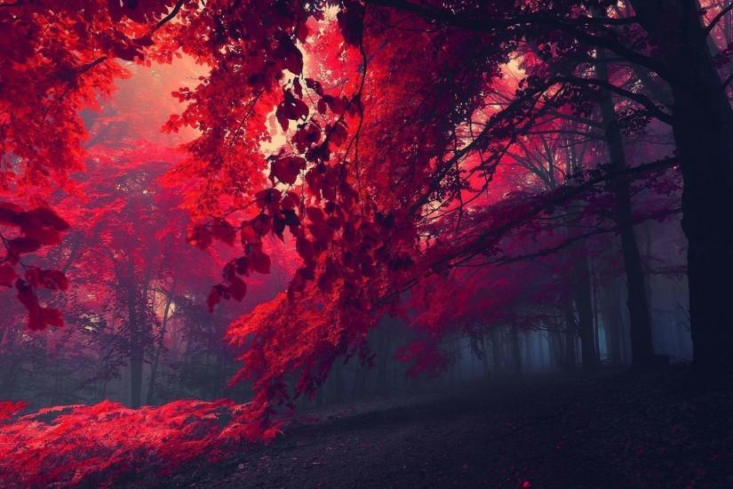 Crimson Forest | Red forest wallpaper 1920x1080