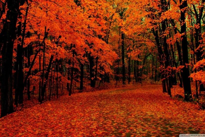 1920x1200 Fall Leaves Wallpapers Fall Foliage Background HD.