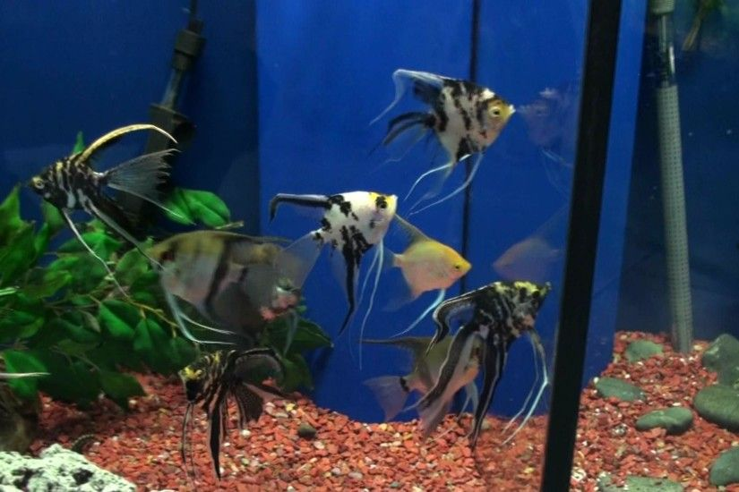 Health Benefits of Tropical Fish tank