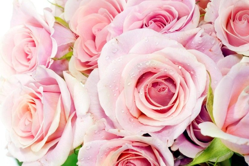 pink roses wallpaper desktop. Â«Â«