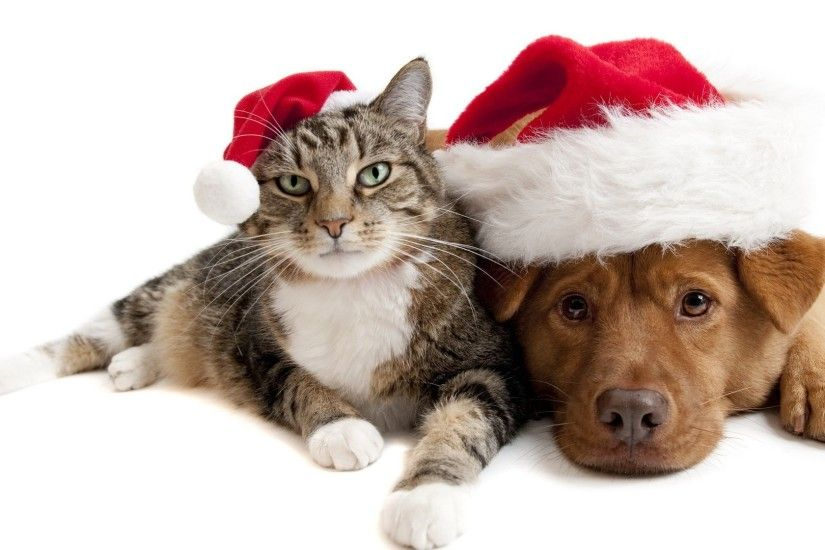 Christmas cat and dog wallpaper 1920x1080 Full HD