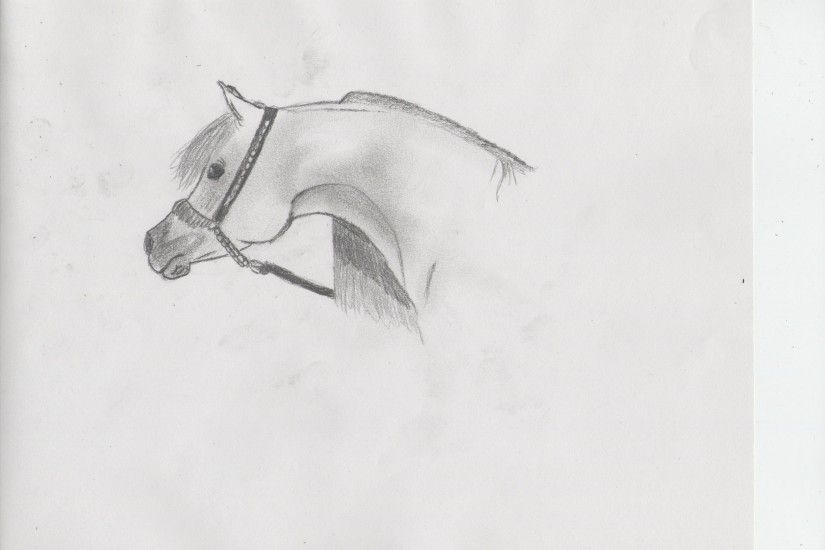 Arabian Horses images Another drawing HD wallpaper and background photos