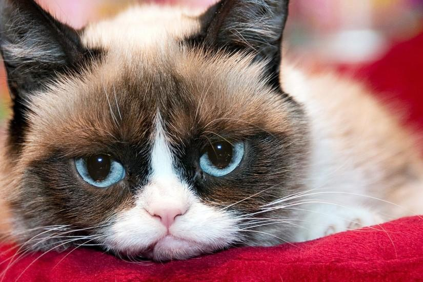 Grumpy Cat Wallpapers For Free