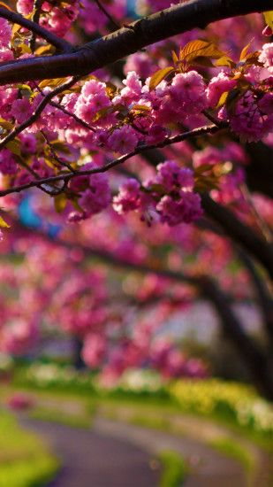 ... Vintage Pink Blossom Flowers Spring Macro Android Wallpaper free .