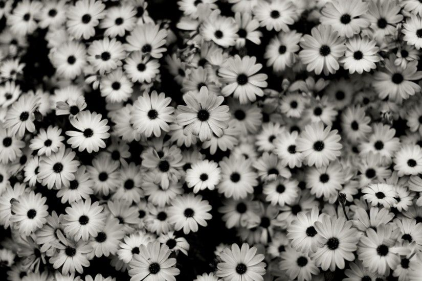 Preview wallpaper black white, flowers, grey, daisies 1920x1080