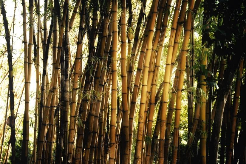 vertical bamboo wallpaper 1920x1200 screen