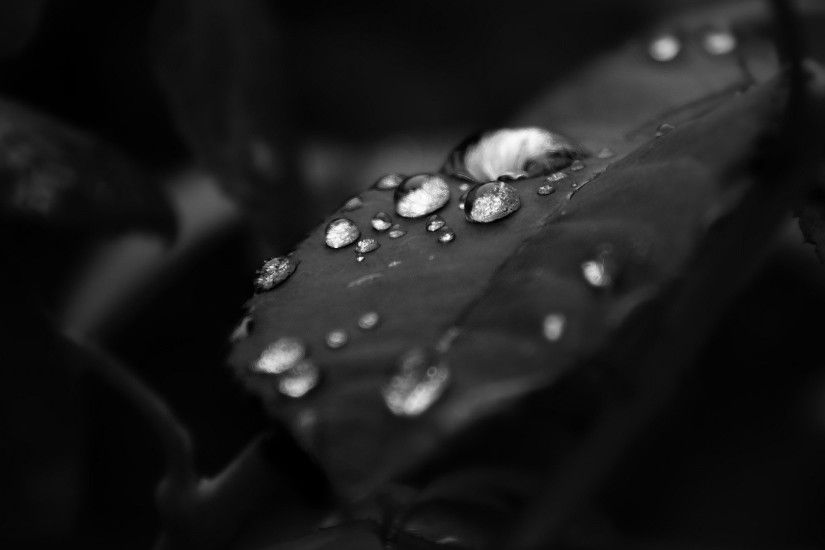 ... raindrops on a leaf hd elegant wallpaper free download raindrops ...
