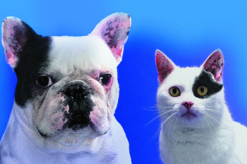 funny cats dogs pictures download