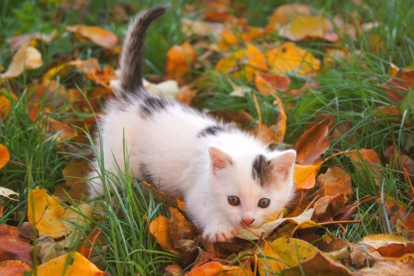 Cute Autumn Free Desktop Wallpaper - WallpaperSafari ...