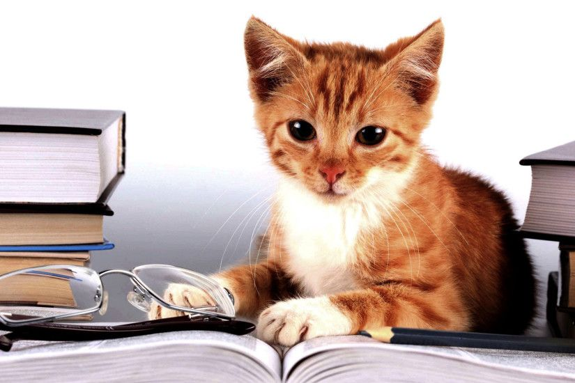 hd pics photos funny cat studying book glasses student hd quality desktop  background wallpaper