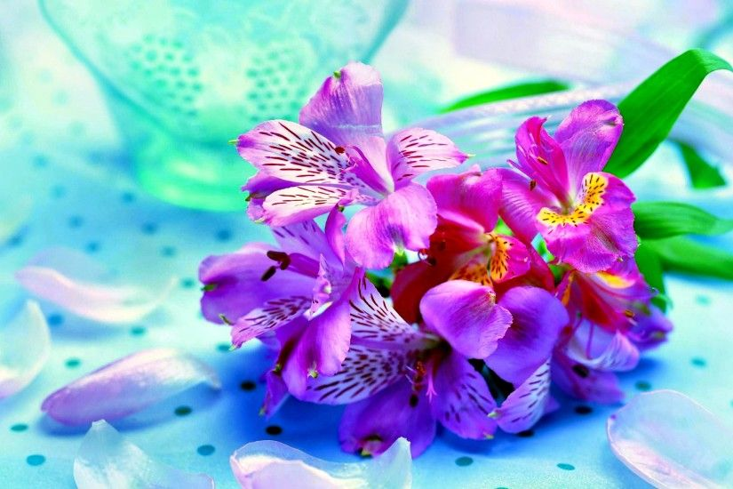 Earth - Iris Flower Pink Colorful Wallpaper