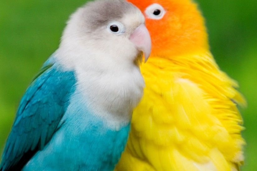 Love Bird Wallpaper Android for Desktop Resolution 2560x1440 px 401.40 KB