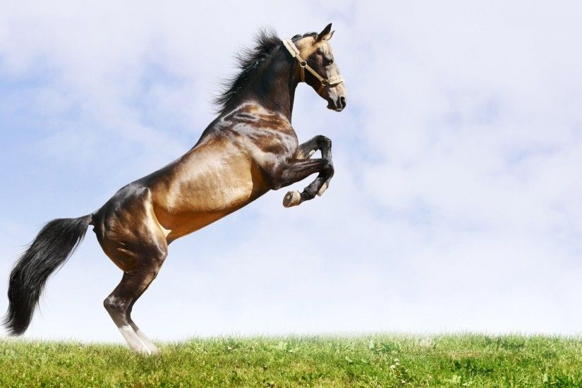 horse background grass sky buck mane tail muscles