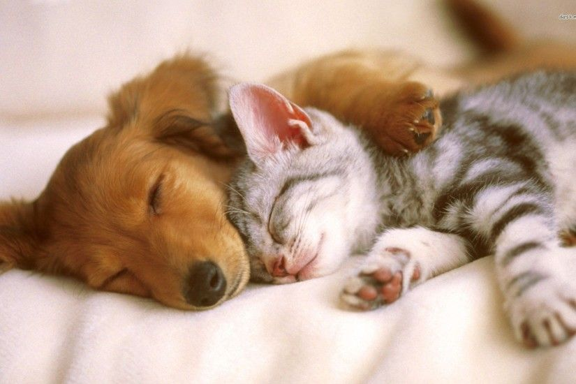 Cute Baby Puppies and Kittens Sleeping id: 4186 - 7HDWallpapers