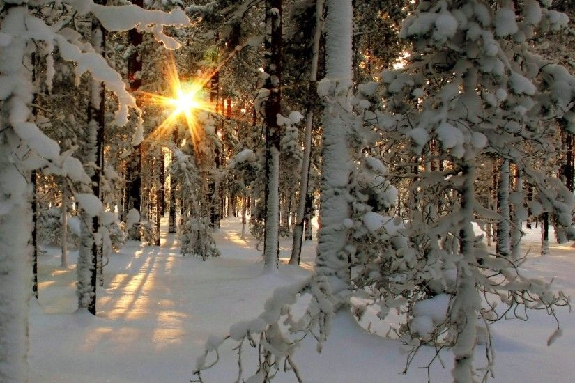 Trees - Winter Sunrise Fprest Nature Trees Landscapes Sunlight Sunbeam  Sunset Cold Snow Images Hd For