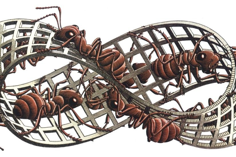 General 2662x1280 artwork M. C. Escher insect ants grid 3D white background  Mobius strip